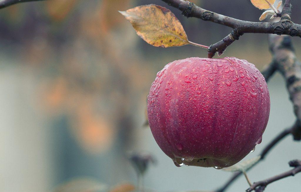 Яблоки от мигрени