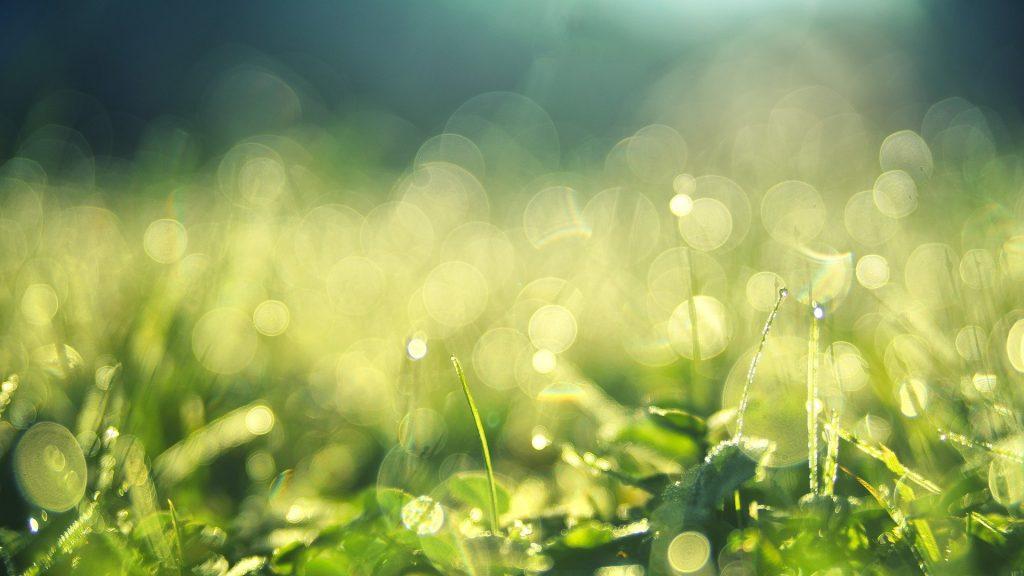 Свежескошенная трава - для радости