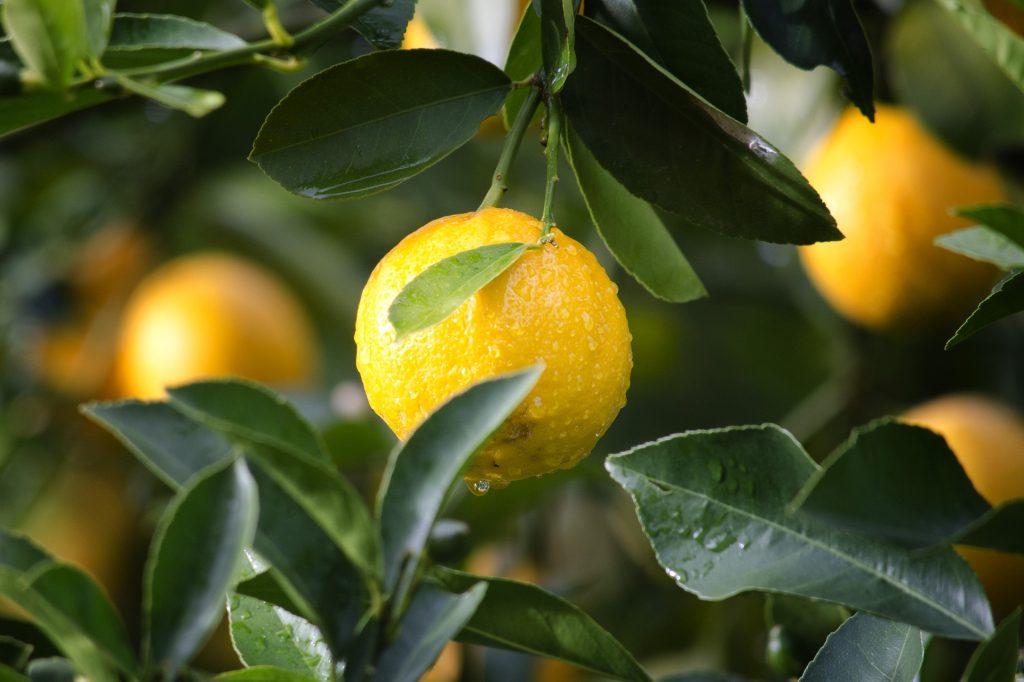 Бесполезные диеты: лимонная